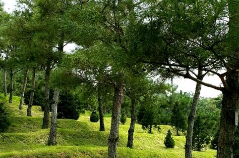 수목장 by 하늘세상